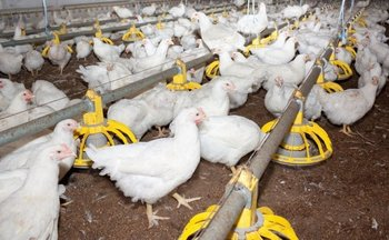 22294891-mmmain Bird flu found .jpg