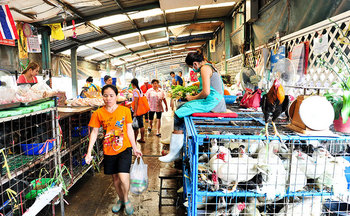 Bird-flu-thailand.jpg
