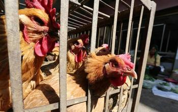 China confirms outbreak of H7N9 bird flu on Hunan egg farms.jpg