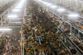 H5N6 Bird Flu Outbreak.jpg
